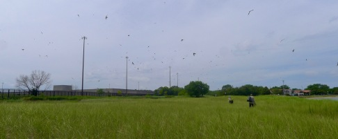 swallows everywhere!