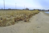 winter erosion on the foredune