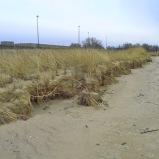 winter erosion on the foredune