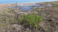 some new wetlands that will benefit from specialized native plants